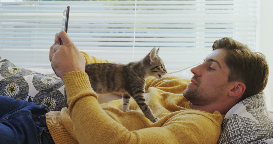 Young man lying on sofa using mobile phone while cat walking on him at home 4K 4k