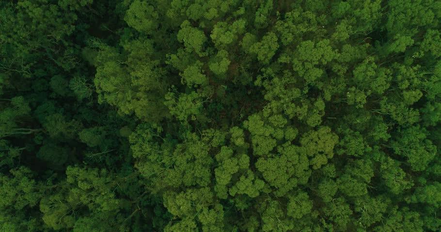 Tree canopy from above. 4K Australia #1009076312