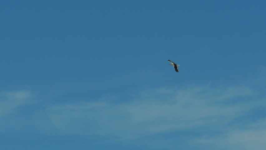 Seagulls flying high close to the ocean   Shutterstock HD Video #1009081319