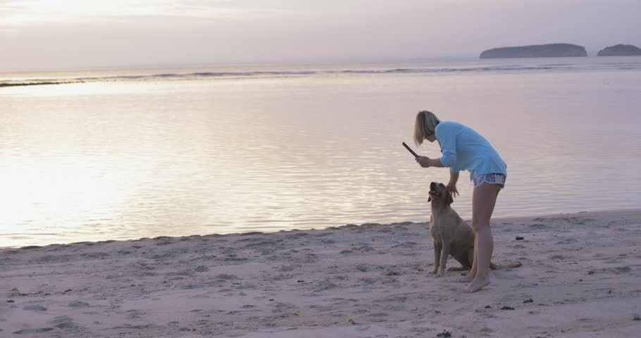 Young girl or woman with short hair training, taming and caressing her dog, pet, labrador on sandy beach near ocen or sea in the evening, holding stick in her hand
