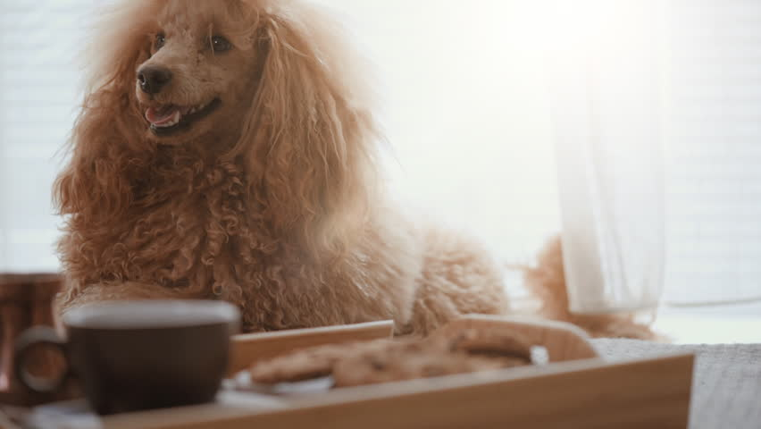 Her dog at home have breakfast . | Shutterstock HD Video #1009150403