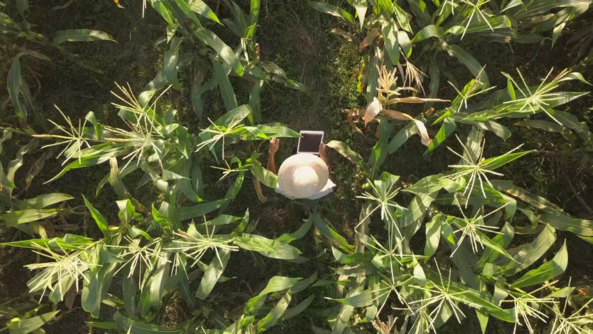 Farmer at Organic Farm Field Checking Corn Quality Using Mobile Tablet Gadget. 4K Aerial. Future Technology Agricultural Food Harvest Footage Concept. | Shutterstock HD Video #1009263251