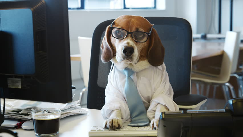 Smart Beagle Working at a Stock Footage Video (100% Royalty-free)  1009366568 | Shutterstock
