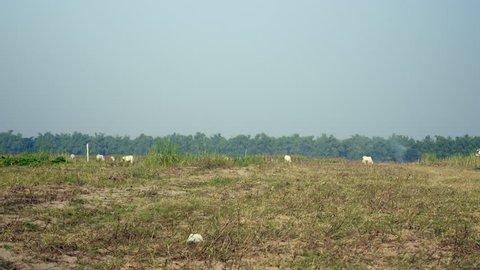 Distance view of a farmer riding an oxcart through field