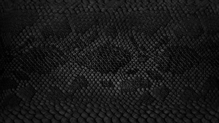 Snake skin background. Close up. 4k  high quality footage. | Shutterstock HD Video #1009535705