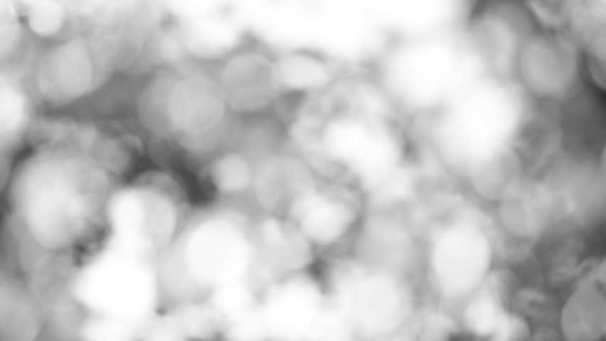 Beautiful elegant black and white nature bokeh background. | Shutterstock HD Video #1009597694