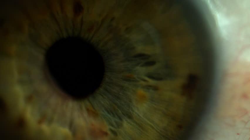 Attentive looking eye macro shot of pupil and iris | Shutterstock HD Video #1009779056