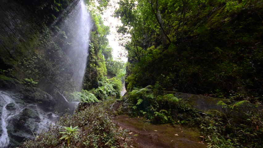 The Lindens waterfall, jungle scenery with giant ferns and big falling water, on the island of La Palma, Canary Islands, Spain.