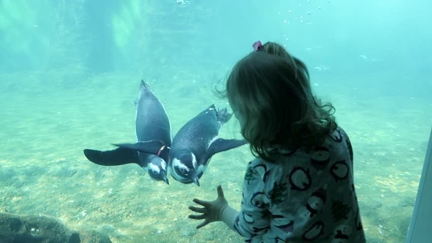 Penguins Swimming Next To Kid Girl behind the Glass In Aquarium | Shutterstock HD Video #1009859090