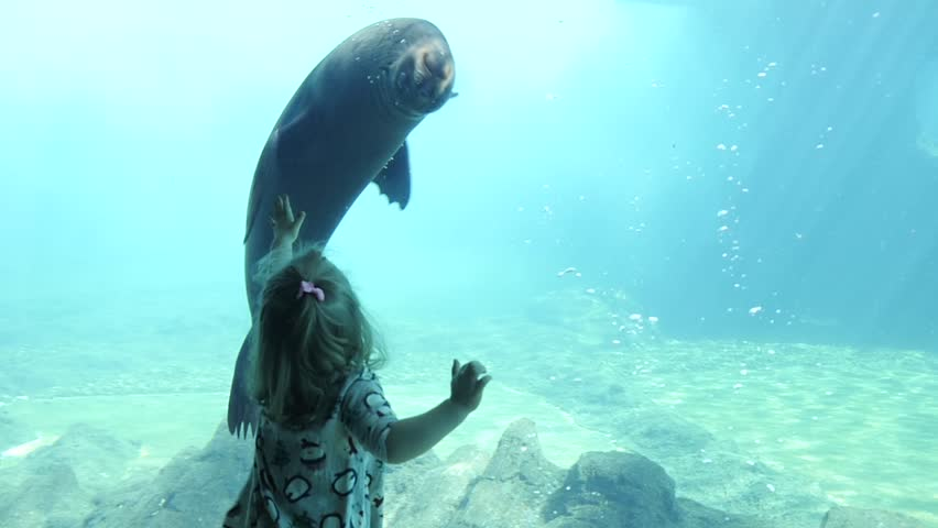 Seal Swimming Next To Kid Girl behind the Glass In Aquarium | Shutterstock HD Video #1009859099