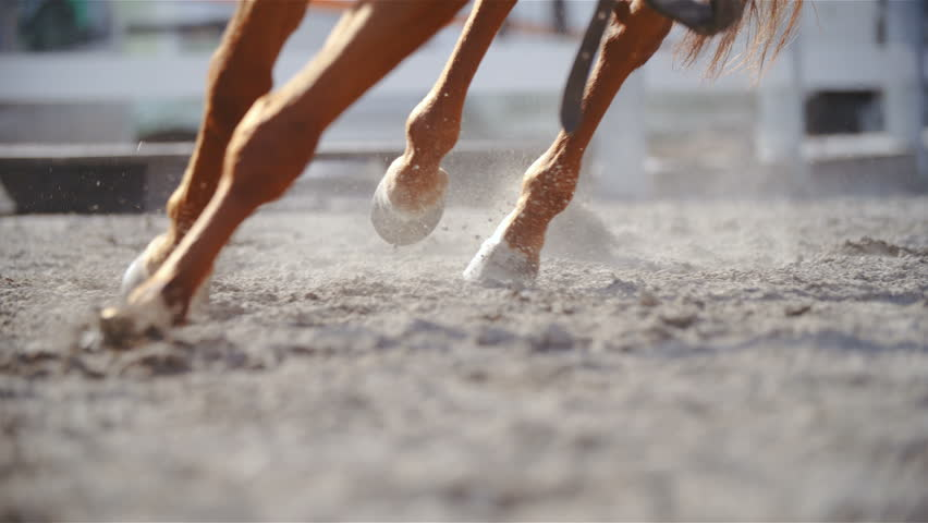 Horse hooves run through sand in slow motion 4K. Long shot tracking of horse hooves in focus while plow through sand while galloping. Close up shot. | Shutterstock HD Video #1009861583