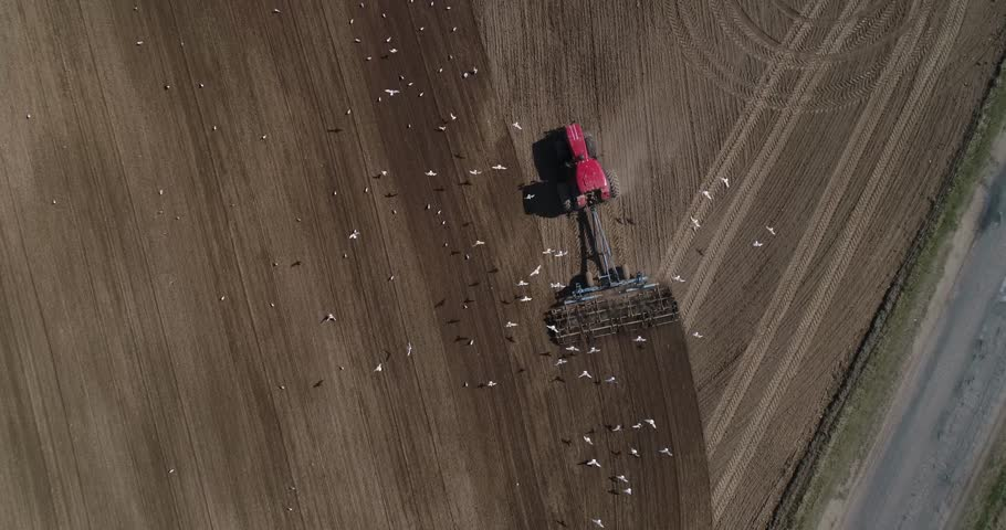 Tractor with cultivator work at plant  #1010056655