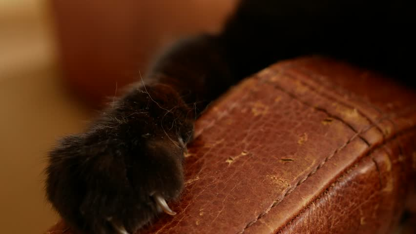 an armchair spoiled by the claws of a cat. scratches from the cat's claws on the upholstery of the chair. 4k, close-up, slow-motion shooting. #1010092103