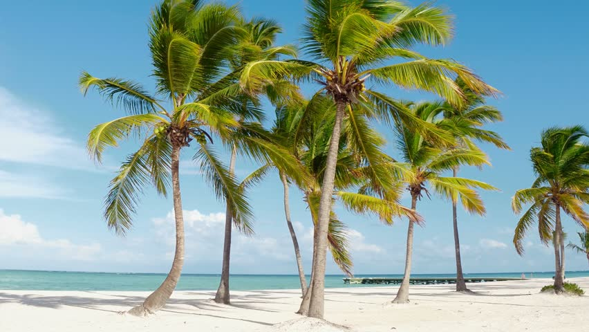 Tropical pristine beach coconut palm trees and turquoise water, white sand. Maldives travel destination. Tropical island vacation idyllic background. Exotic sandy beach, palm trees Caribbean sea . | Shutterstock HD Video #1010097179