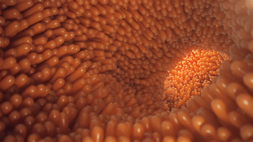 3D animation close-up Intestinal villi. Intestine lining. Microscopic villi and capillary. Human intestine. Concept of a healthy or diseased intestine. | Shutterstock HD Video #1010134949