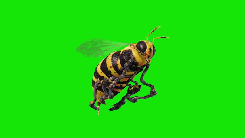 Bee Wasp Flies Loop Green Screen 3D Renderings Animations
