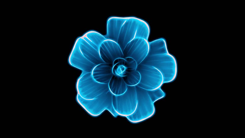 opening long blooming blue flower time-lapse 3d animation isolated on background new quality beautiful holiday natural floral cool nice 4k video footage #1010194187