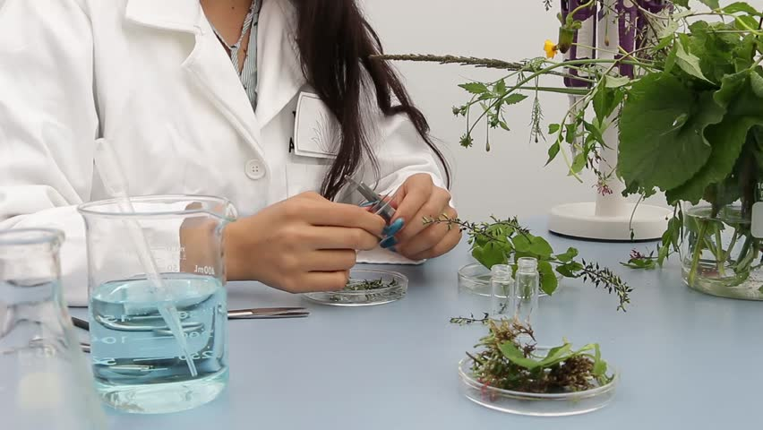 Young botanist researcher preparing samples for further analysis Royalty-Free Stock Footage #1010329790
