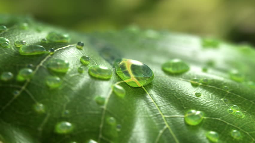 Water Drop Flows Down on a Leaf, Beautiful realistic 3d animation. 4K #1010344019