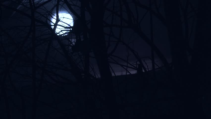 Cinematic Bats Flying In Front Of Moon And Trees At Night, 4K Halloween.
