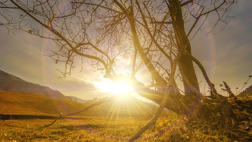 4K UHD time lapse of death tree and drought disaster, dry yellow grass and soil at mountian landscape with clouds and sun rays. Climate change, global warming and ecology problem concept. Horizontal   Shutterstock HD Video #1010463743