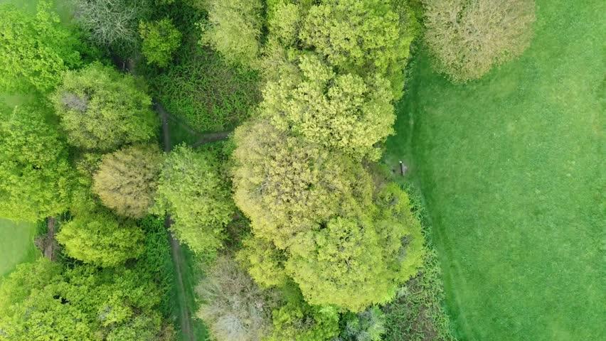 Green Forest On Top | Shutterstock HD Video #1010508116