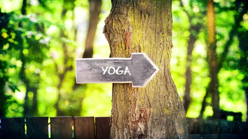 Yoga concept,wooden sign on tree   | Shutterstock HD Video #1010563376