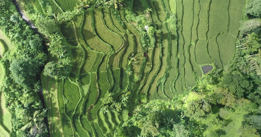 Aerial view of rice terrace. Flight over of Jatiluwih rice field - October 2017: Bali, Indonesia