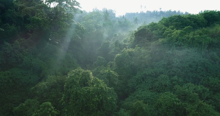 Aerial view of foggy rainforest. Flight over of jungle #1010565914