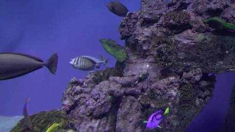 Coral reef fishes floating underwater video clip
