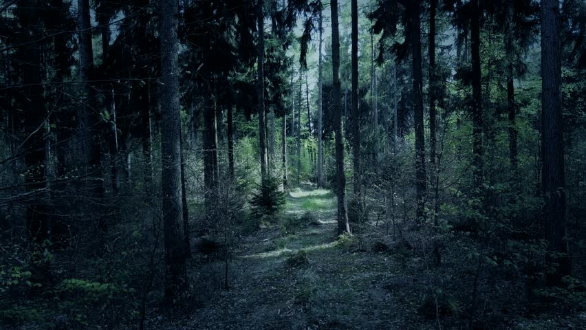 Drone shot aerial fx color graded fly through dark spooky eerie weird forest between trees 4k / Drone shot aerial fx color graded fly through dark spooky eerie weird forest between trees 4k