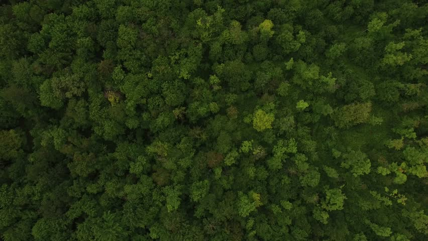 4K aerial of flying over a beautiful green forest in a rural landscape, Vermont, USA #1010761760