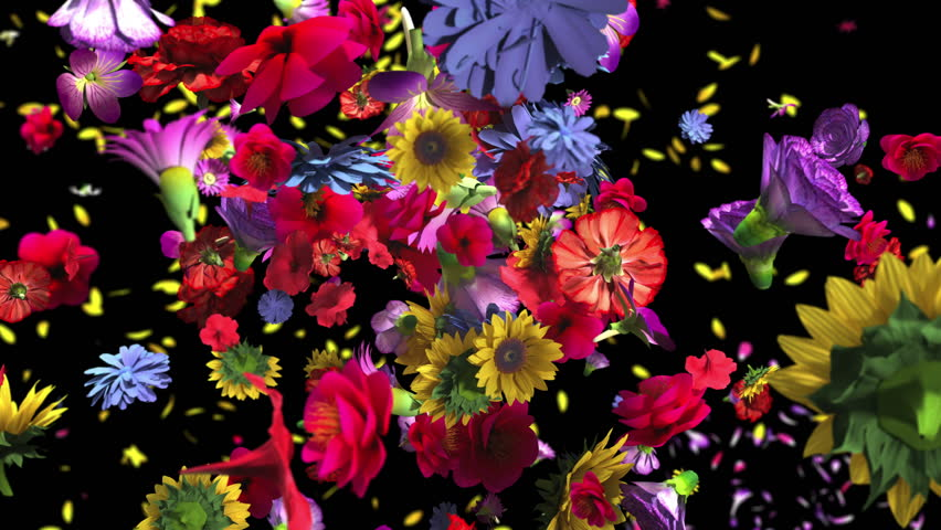 Colorful big flowers background in 4K | Shutterstock HD Video #1010804123