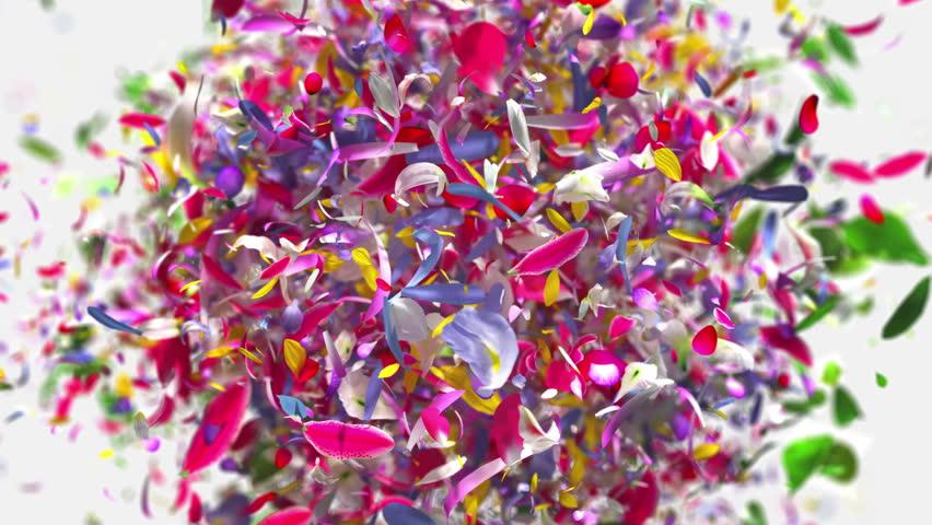 Exploding flower petals in 4K | Shutterstock HD Video #1010825138