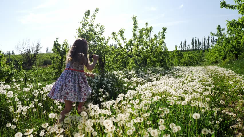 A girl runs through the garden with dandelions on a sunny day. Slow motion. #1010833352