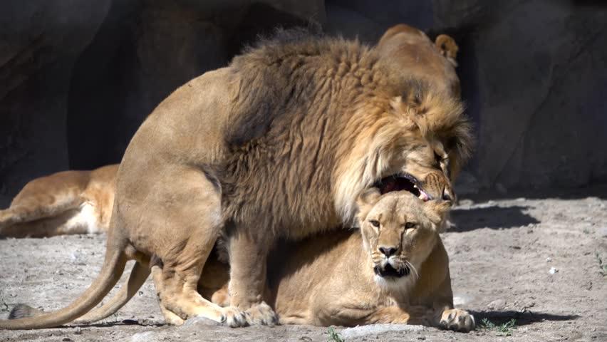 Frau sexualverhalten löwe Sternzeichen Löwe
