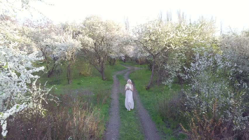 Aerial view. Girl and blooming cherry. The girl is walking in nature lifestyle blossoming garden cherry