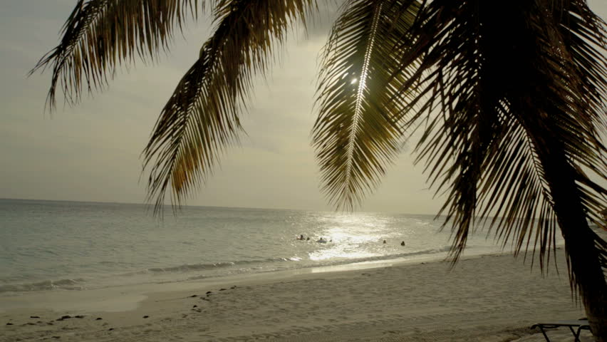 palm trees at the sea, tipical image of Aruba landscape