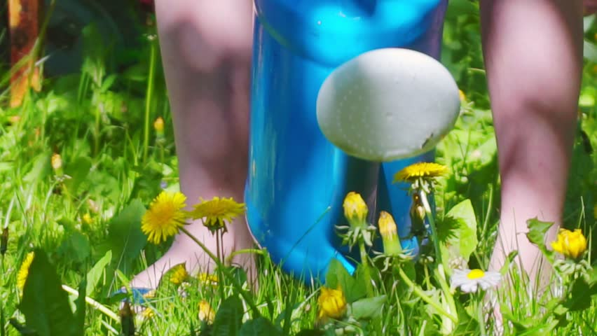 Watering yellow flowers from the watering can.close-up | Shutterstock HD Video #1011363122