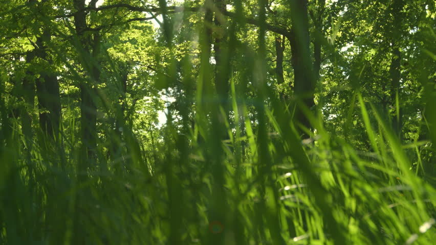 Fresh green grass in spring | Shutterstock HD Video #1011505748
