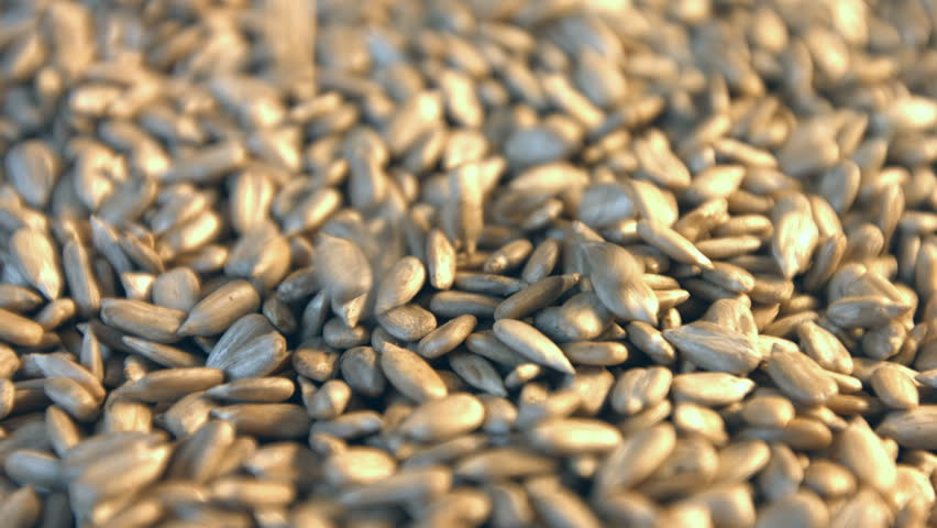 Shelled sunflower seeds. 2 Shots.  Slow motion.  1. Sunflower seeds fall down and fill the space frame. Vertical slow pan.  2. Horizontal slow pan. | Shutterstock HD Video #1011523955