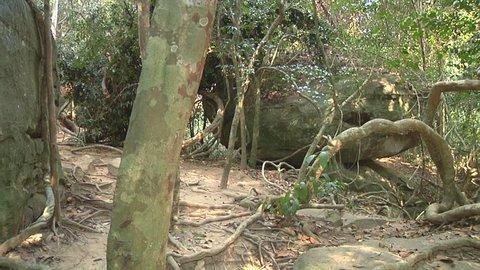 Pan Wide Shot of forest near Kbal Spean at Kulen Hills in Angkor, Siem Reap, Cambodia