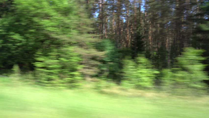 Fast driving on the forest road. Driving Plate. Processing Plate. View through the window of a car.