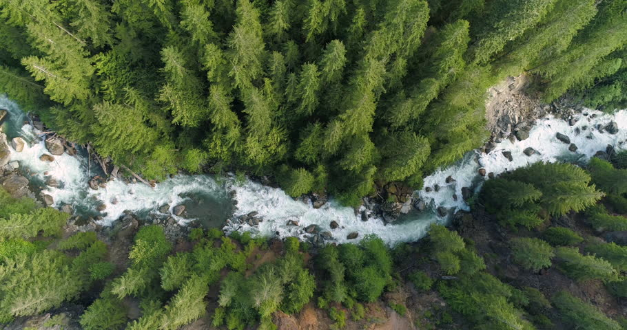 High Above Raging River Looking Straight Down on Rapids Through Thick Forest of Tall Evergreen Trees