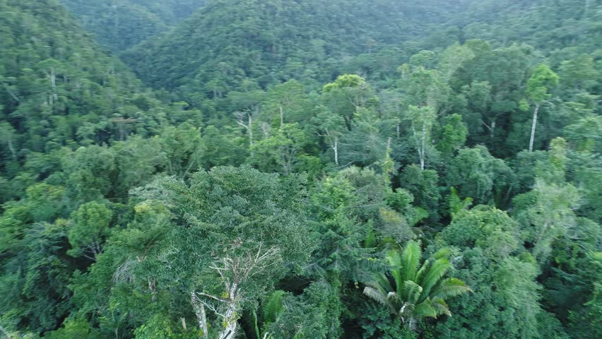 Rotating around tree in Mayan Mountains in Central American Jungles