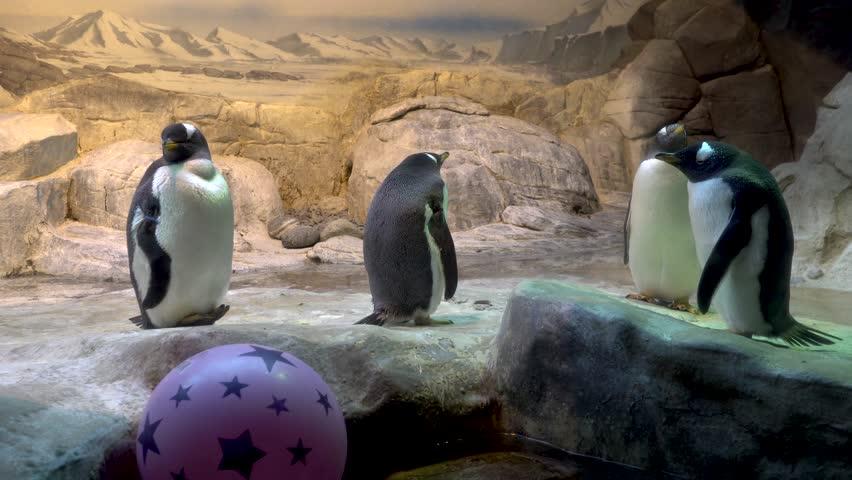 Penguin in a zoo.