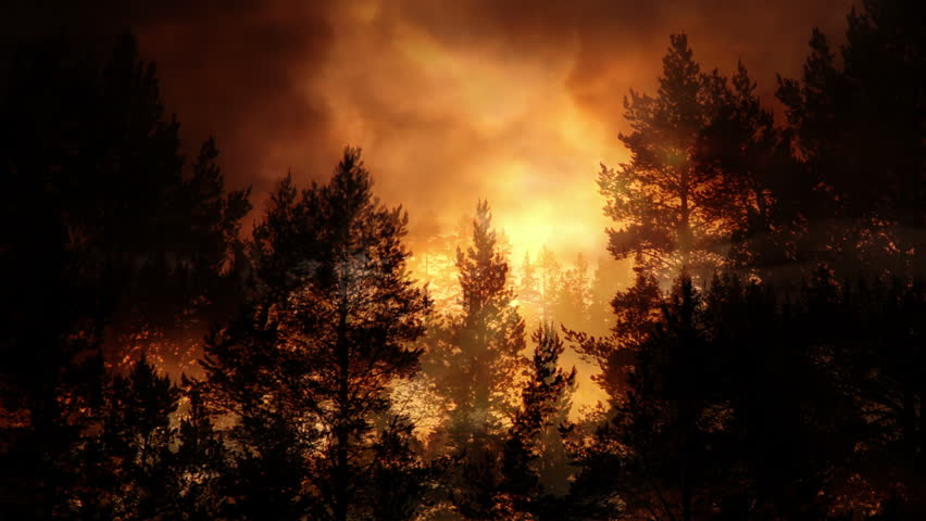 Forest and evening light background animation | Shutterstock HD Video #1012153340