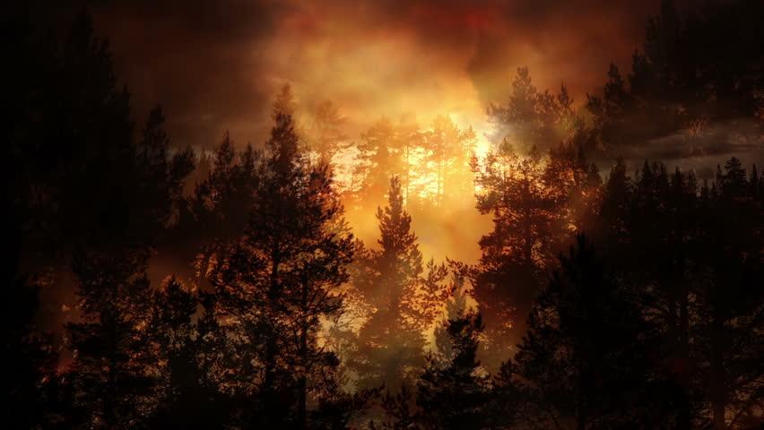Forest and evening light background animation | Shutterstock HD Video #1012153343