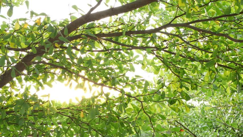 beautiful sun light through green tree in the morning #1012156679