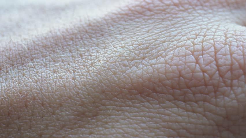 4k Skin Macro | Shutterstock HD Video #1012237406